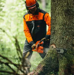 Worker cutting tree base with a chainsaw